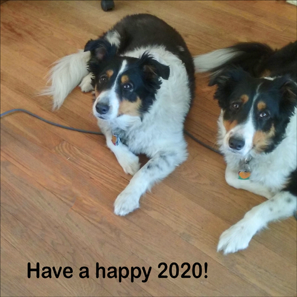the pups wishing us all a happy new year 2020