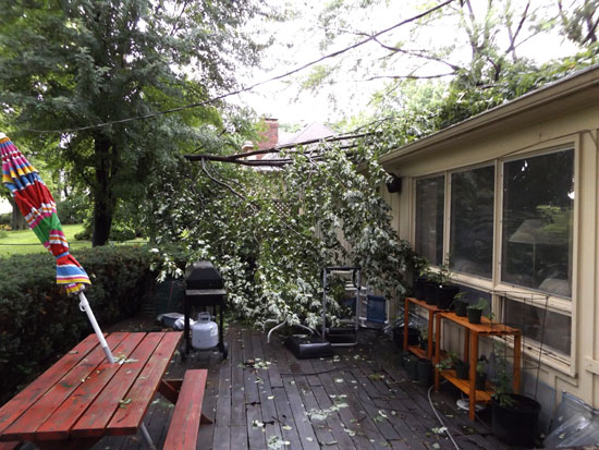 part of a tree that fell on our roof